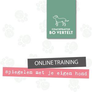 Productfoto online cursus Spiegelen met je hond - Bo vertelt